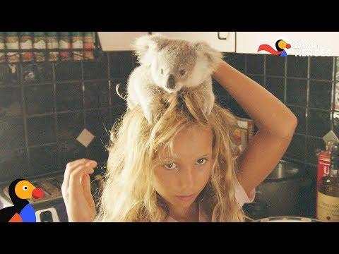 Little Girl Is An Expert Koala Rescuer | Dodo Heroes Season 1