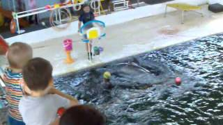 Дельфины в дельфинарии 3, поют, играют мячом ➨ Dolphins in dolphinarium 3, sing, play ball