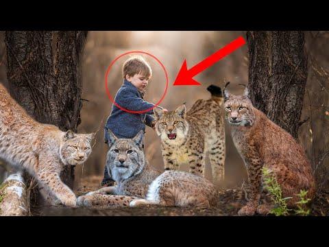 Сын егеря спас от браконьеров маленьких рысят. И вот как они его отблагодарили...