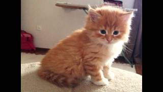 Рыжие котята!