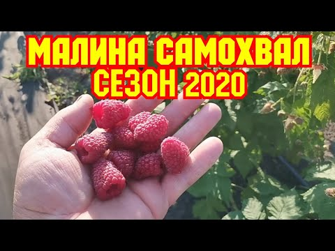 /Малина САМОХВАЛ, /Сезон 2020г! /