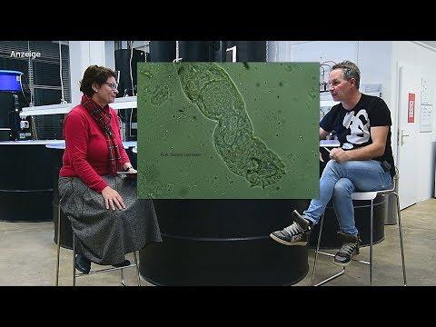 Modern Koi Blog #2128 - Mikroskopier Kurs Teil 9: Parasitenkunde II / II