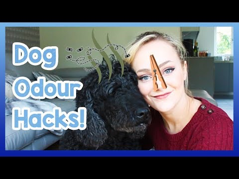 How To Get Rid Of Bad Dog Odour! Tips On How To Stop Your Home And Possessions Smelling Of Dog!