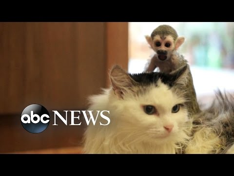Cat Adopts Abandoned Baby Monkey