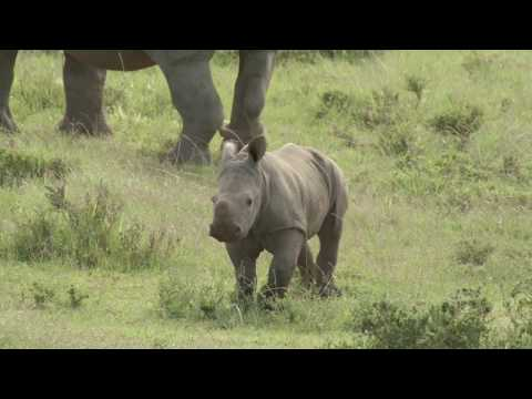 Rescue Rhinos from Extinction