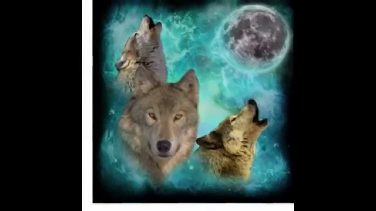 Las Mejores Fotos De Lobos Youtube