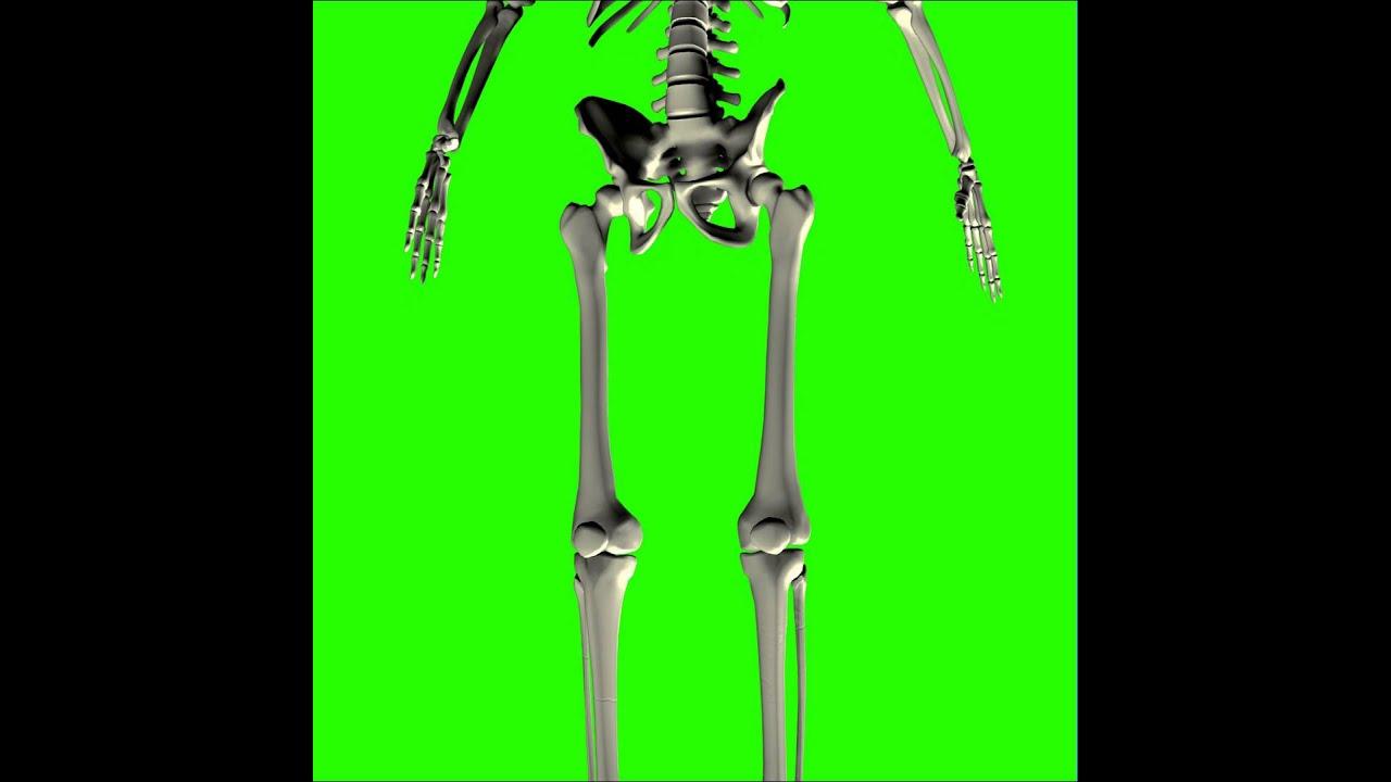 Pantalla verde - Esqueleto de cabeza a pies - YouTube