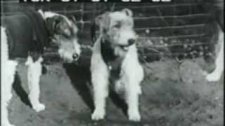 Dog Tricks - Dogs Playing Football 1940s