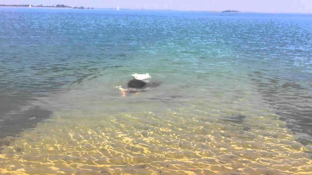Swimming In The Lac Du Der Chantecoq France Youtube