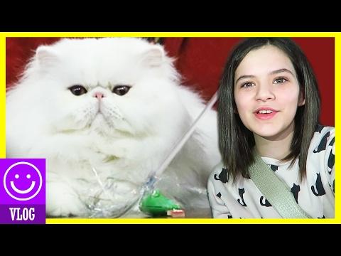 THE CAT SHOW!  |  KITTIESMAMA