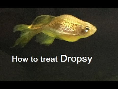 How To Treat Dropsy