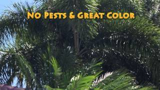 Palm Tree Care Florida NaturePest 786-222-7069