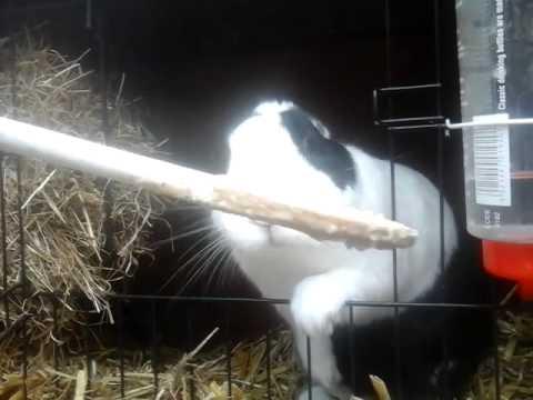 Konijn eet van lepel kalfs ragout