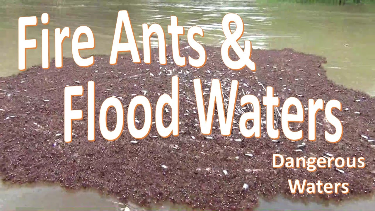 how to keep fire ants out of house