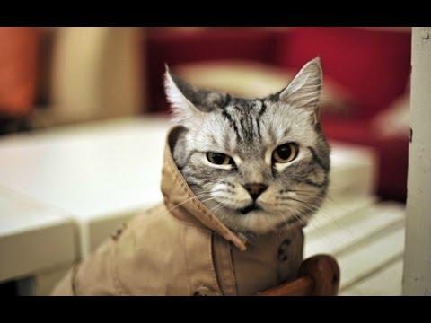 Смешные картинки про котов  Котэвасия!