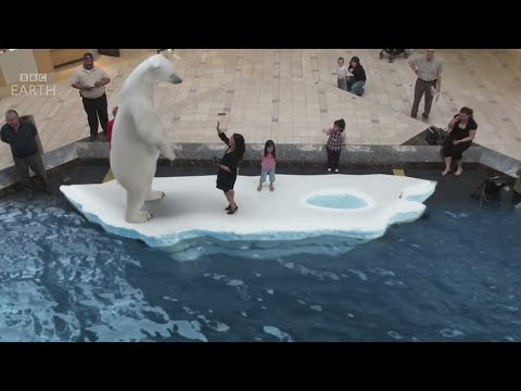 BBC Frozen Planet - Augmented Reality experience by INDE