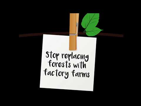 Stop Replacing Forests With Factory Farms