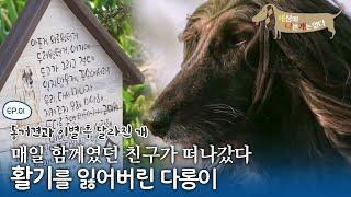 세상에 나쁜 개는 없다 - 동거견과 이별 후 달라진 개…