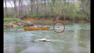 These Dogs Were Adrift In A Boat And Frantically Barking When An Animal Suddenly Came Towards Them