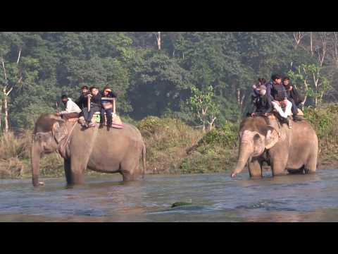 Nepal: exploring Chitwan National Park