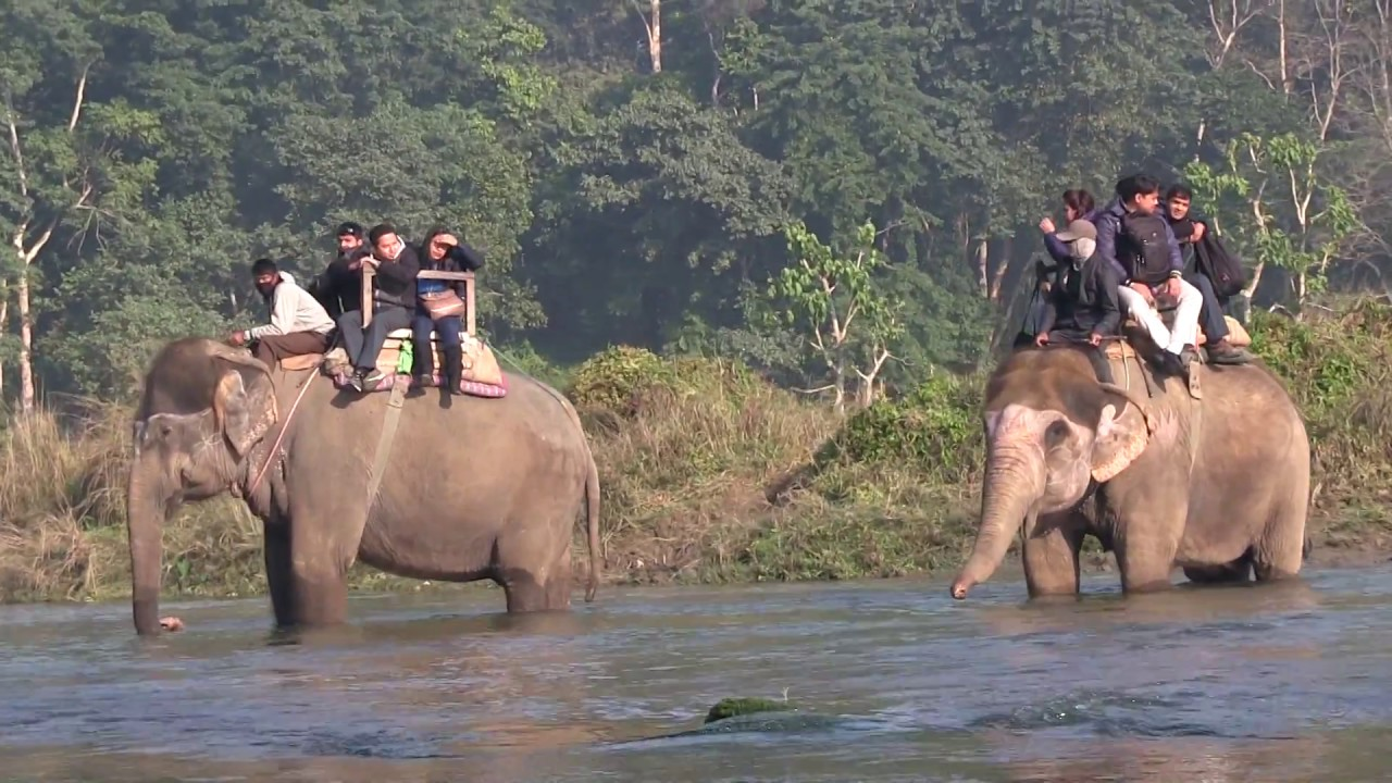Nepal: exploring Chitwan National Park - YouTube