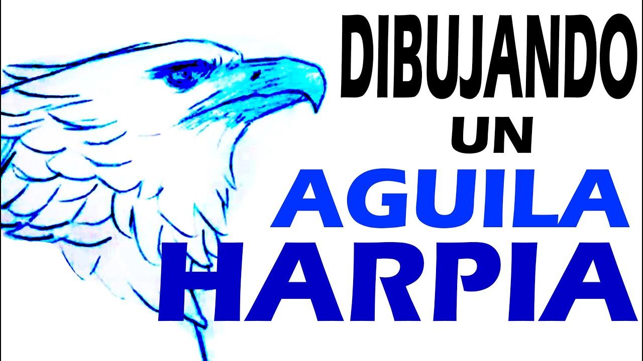 dibujando un aguila harpia drawing harpy eagle youtube