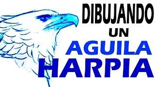 DIBUJANDO UN AGUILA HARPIA / DRAWING HARPY EAGLE