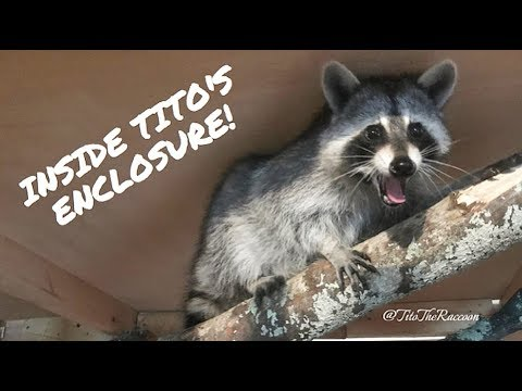 Inside Tito's Enclosure!