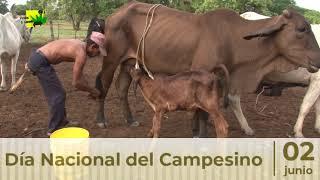 Día Nacional del Campesino: 2 de junio de 2021 | Tierra Pastos y Ganado