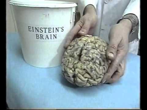 Barthes on Einstein's real brain