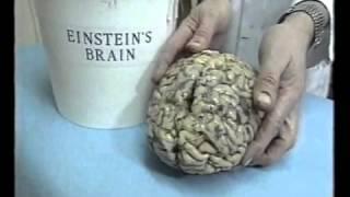 Barthes on Einstein s real brain