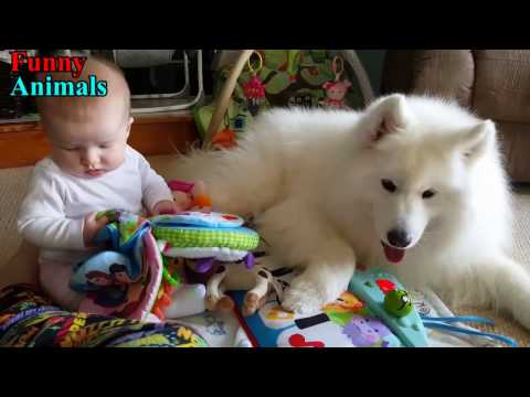 Samoyed Dog and Baby and wonderful moments – Dog Loves Baby Compilation