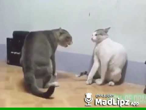 Two cats fighting in Hindi