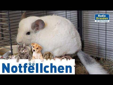 Radio Dresden - Notfellchen Mai