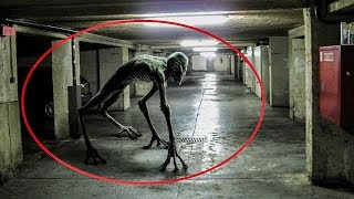 5 Giant Underground Creatures Caught On Camera