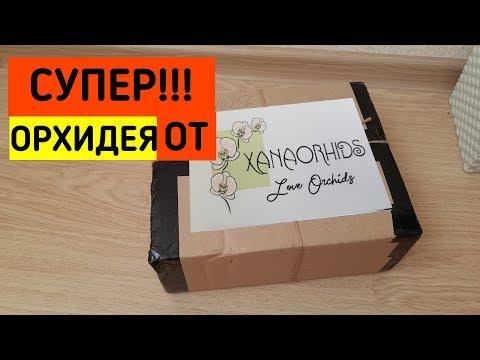 НОВИНКА!!! ОРХИДЕЯ от Оксаны Астрахань| орхидеи Orchid Orchids почтой по почте