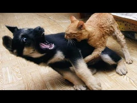 BEST OF FUNNY ANIMAl FAIL Videos of the WEEK