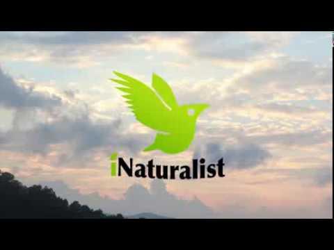 iNaturalist logo animation