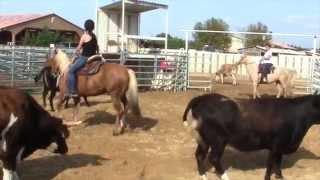 Ranch Sorting avec Adeline et Marjorie