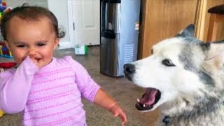 Funniest Babies Laughing at Pets Hysterically - TRY NOT TO LAUGH