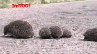 Zwierzęta duże i małe - Podlasie