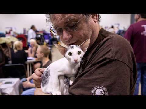 2017 Earendil GLR Cat Show