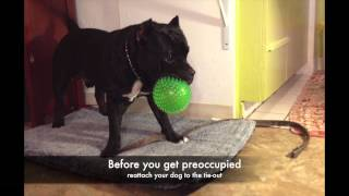 Easiest Way To Teach Your Dog Good House Manners