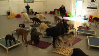 Doggy Daycare in Dublin, Ireland