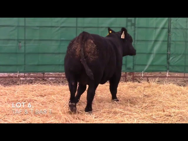 Taliaferro Angus \u0026 T Bar T Angus Ranch - 6