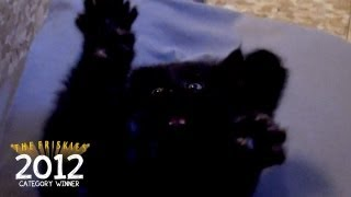 "The Friskies 2012 Category Winner (Catness): ""Black Cat Stick"