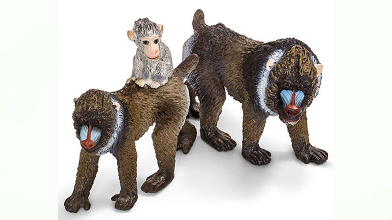 Toys From Africa : Animals from africa schleich toys youtube