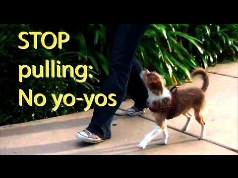 Stop pulling and 'Yo-yoing'- Dog Training