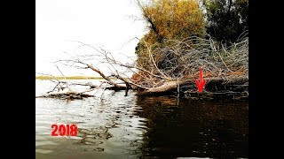 Рыбалка осенью 2018  Пол мешка рыбы из под дерева