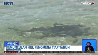 FENOMENA UNIK! Ratusan Ikan Hiu Muncul di Pantai Nusa Dua, Bali - SIS 22/08